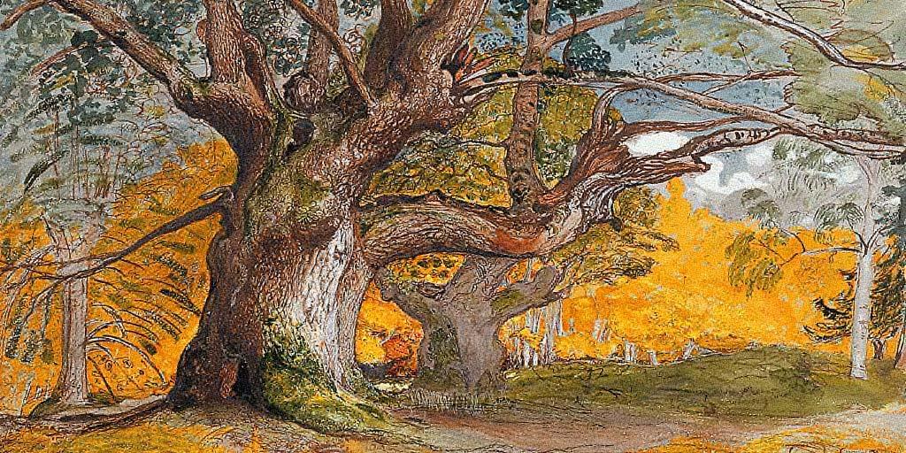 Oak Tree Poems
